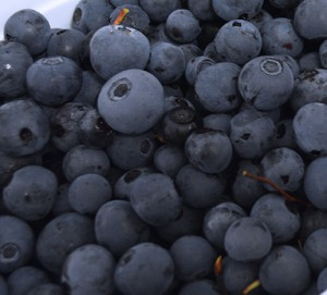 Wild Alaska blueberries